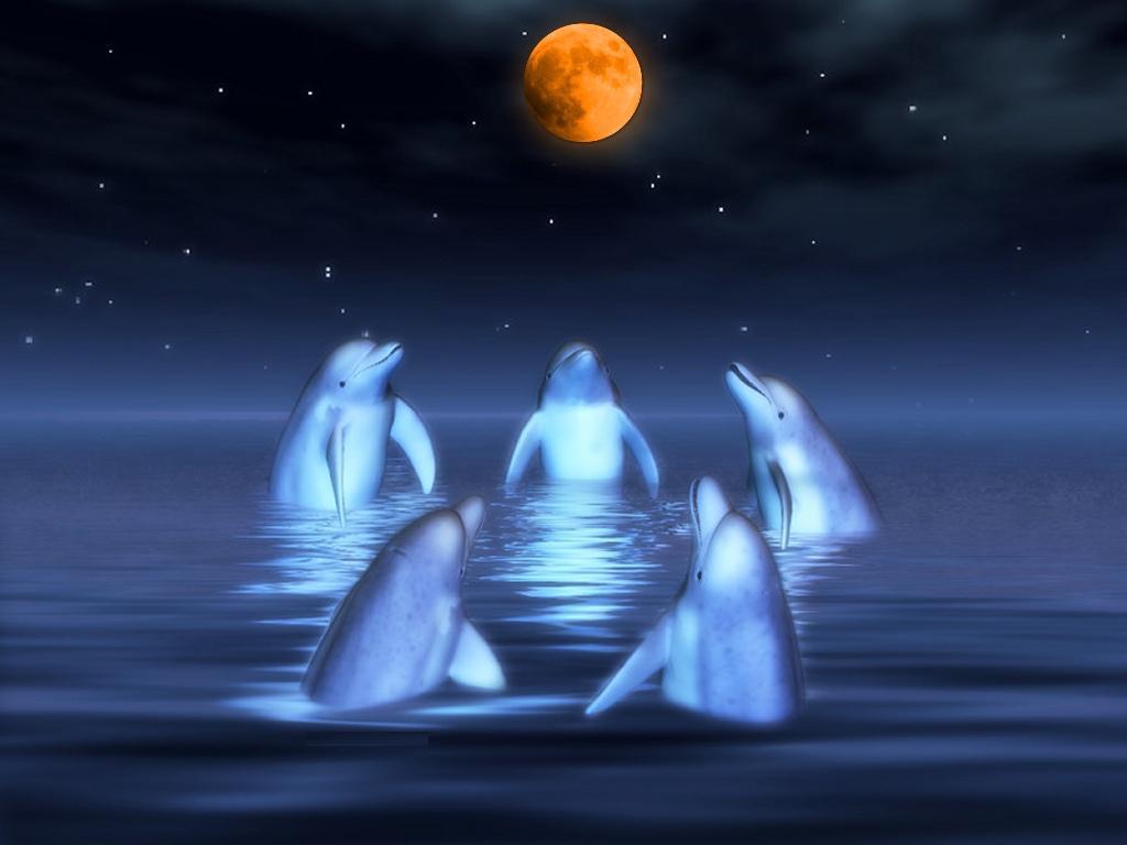 Les fonds ecrans dauphins for Image de fond ecran qui bouge gratuit
